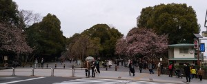 袴腰正面入口の枝垂桜